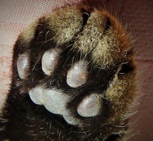 cats paw hi five