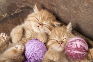 ginger kittens purring