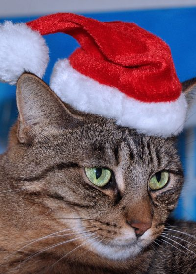 Cat wearing Christmas hat