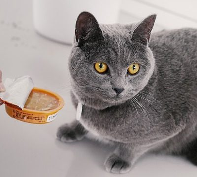 offering a grey cat food