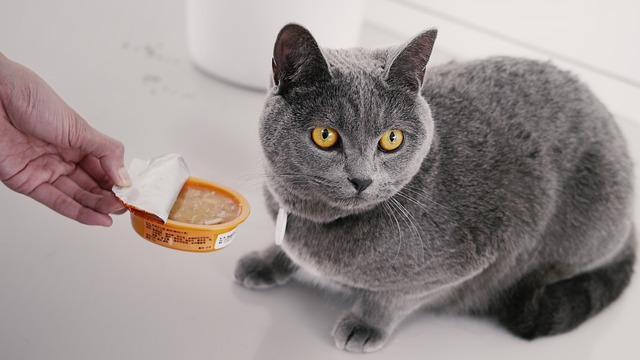 What Is The Best Cat Food For My Persian