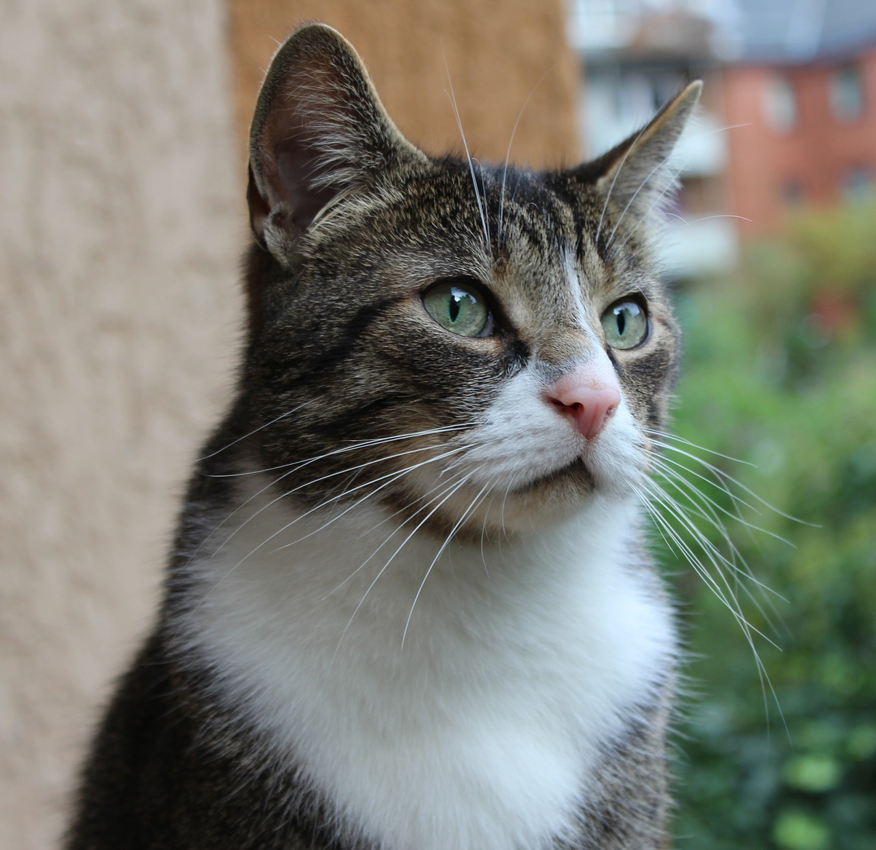 Dementia in older cats - symptoms, care and treatment ...