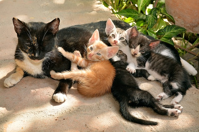 cat with kittens feeding