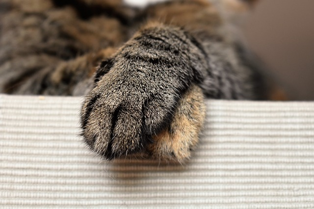 Why Do Cats Like Smelly Feet