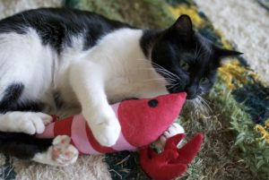 black and white cats plays with toy mouse