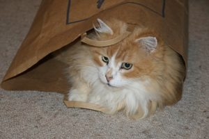 ginger and white cat plays in a brown paper bag